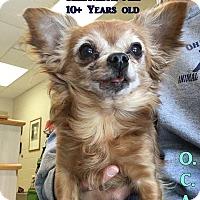 Adopt A Pet :: 1-9 Fuzzy - Triadelphia, WV