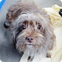 Adopt A Pet :: Terrier male X - San Jacinto, CA
