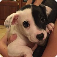 Adopt A Pet :: Flynn - Phoenix, AZ
