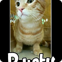 Adopt A Pet :: Rusty - Edwards AFB, CA