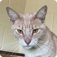 Adopt A Pet :: Charlie - Chula Vista, CA