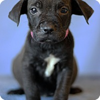 Adopt A Pet :: Dani - Waldorf, MD