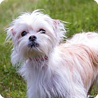 Adopt A Pet :: Lily D3321 - Shakopee, MN