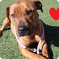 Adopt A Pet :: Zephyr - Reno, NV