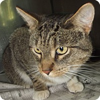 Adopt A Pet :: 20384 - Cheboygan, MI