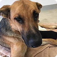 Adopt A Pet :: Juneau - Agoura Hills, CA
