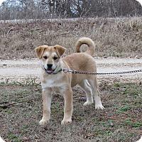 Adopt A Pet :: KODEE - Hartford, CT