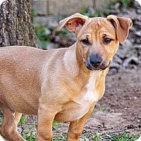 Adopt A Pet :: Berkley - Plainfield, CT