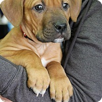 Adopt A Pet :: Theodore - Baltimore, MD