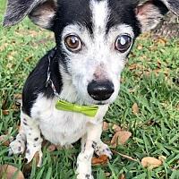 Adopt A Pet :: Buddy - Weston, FL