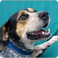Adopt A Pet :: Georgia - Mocksville, NC