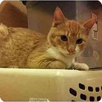 Adopt A Pet :: Dante - Modesto, CA