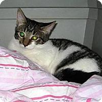 Adopt A Pet :: Daisy - Kirkwood, DE