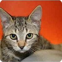 Adopt A Pet :: FLO - SILVER SPRING, MD