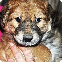 Adopt A Pet :: Connie - Phoenix, AZ