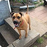Adopt A Pet :: Sheena - selden, NY