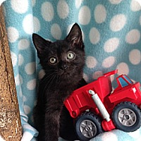 Adopt A Pet :: Licorice - Union, KY