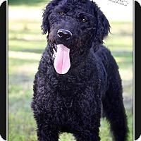 Adopt A Pet :: Sonny - Albany, NY