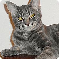 Adopt A Pet :: Yelena - North Highlands, CA