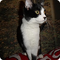 Adopt A Pet :: NayNay - Norwich, NY