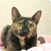 Adopt A Pet :: Mimi - Foothill Ranch, CA