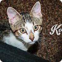 Adopt A Pet :: Kody - Bentonville, AR
