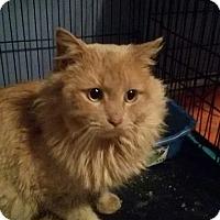 Adopt A Pet :: Leo - McDonough, GA