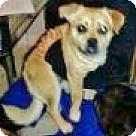 Adopt A Pet :: Johnny Cash
