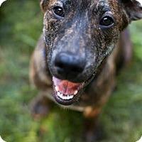 Adopt A Pet :: Elk Flanders - Austin, TX