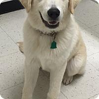 Adopt A Pet :: Tundra - Orlando, FL