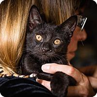 Adopt A Pet :: Itsy - Novato, CA