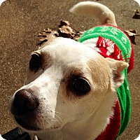 Jack Russell Terrier Mix Dog for adoption in Garland, Texas - Jack