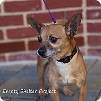 Adopt A Pet :: Chico - Manassas, VA