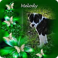 Adopt A Pet :: Melody - Crowley, LA
