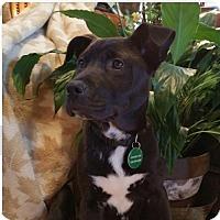 Adopt A Pet :: Quest - Nashville, TN