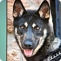 Adopt A Pet :: KAYA VON KIRSA - Los Angeles, CA