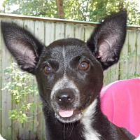 Adopt A Pet :: Rosalie - Yardley, PA