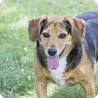 Adopt A Pet :: Tamber - Baltimore, MD