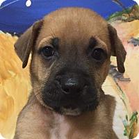 Adopt A Pet :: Linus - Ft. Lauderdale, FL