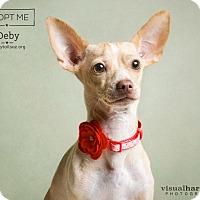 Adopt A Pet :: Deby - Chandler, AZ