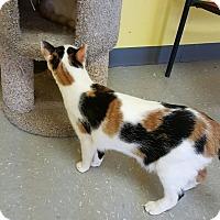 """Adopt A Pet :: """"  Pippa  """" - Scottsburg, IN"""