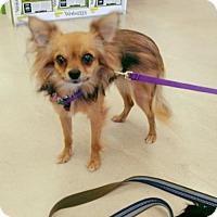 Adopt A Pet :: Tanuki - Ponca City, OK