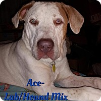 Adopt A Pet :: Ace - Cheney, KS