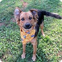 Adopt A Pet :: PEPSI - Lexington, NC