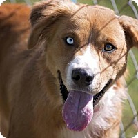 Adopt A Pet :: Tuff - Pryor, OK