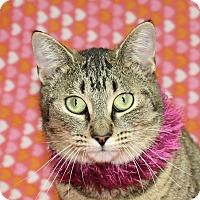 Adopt A Pet :: Fiona - Jackson, MI