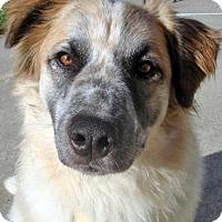 Adopt A Pet :: Farley in NY - Beacon, NY