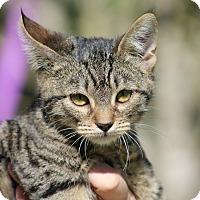 Adopt A Pet :: Peeps - Ocean Springs, MS