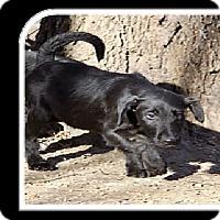 Adopt A Pet :: Max-pending adoption - Manchester, CT