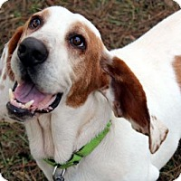 Adopt A Pet :: COTTON - ADOPTION PENDING! - Pennsville, NJ